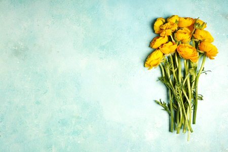 arrangements: Yellow ranunculus flowers close-up on a blue table