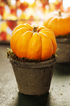 Tiny pumpkins in flower pots on old table Stock fotó