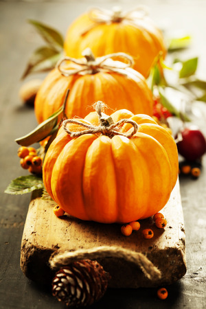 Pumpkins composition on rustic background