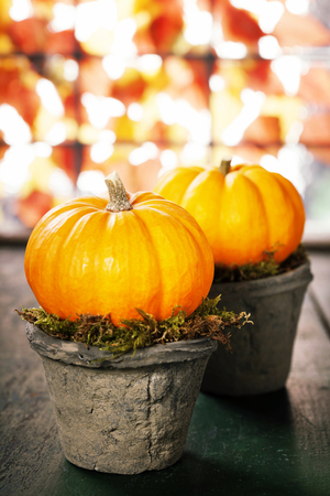 Tiny pumpkins in flower pots on old table Stock Photo