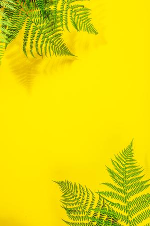 Fern leaves on yekkow background