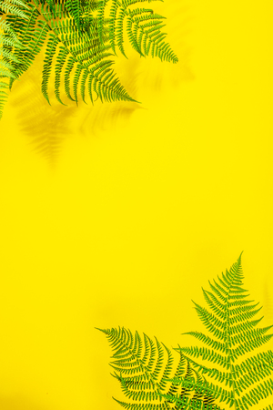 Fern leaves on yekkow background