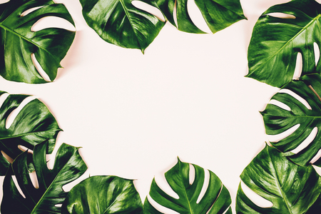 Tropical leaves Monstera on colorful background. Flat lay, top view