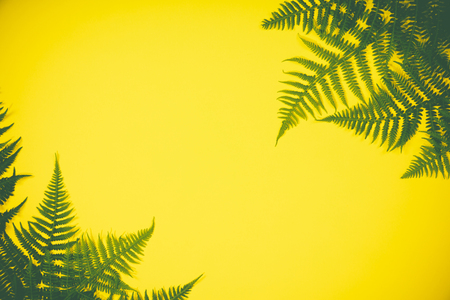 Fern leaves summer minimal background with a space for a text, flat lay, view from above