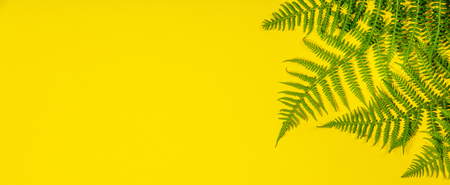 Fern leaves on yelow background, flat lay, top view