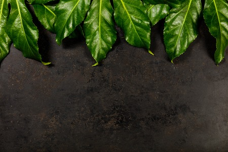 Tropical leaves on dark rustic background. minimal concept. Flat lay.