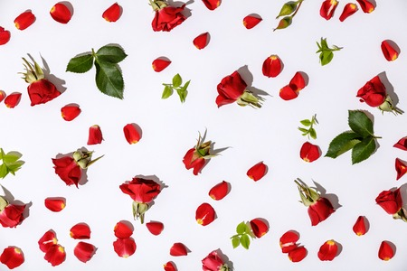 Floral pattern with red roses, petals and leaves on white background Standard-Bild - 123183055