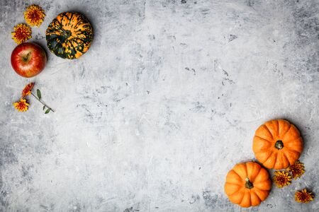 Pumpkins and flowers on grey concrete background