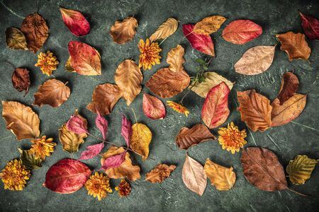 Autumn leaves over green vintage background