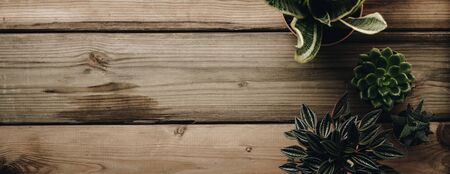 Succulents banner or header with different plants on wooden background, flat lay, top view, copy space. Minimalistic Home decor and gardening concept. Stylish interior with a lot of plants 版權商用圖片