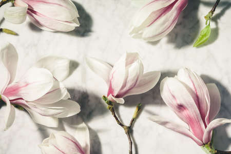 Beautiful pink magnolia flowers on white marble table. Top view. flat lay. Spring minimal concept. Reklamní fotografie
