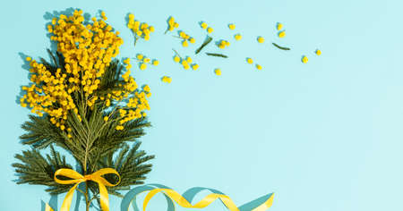 Spring mimosa branches with a yellow ribbon flat lay on blue background Reklamní fotografie