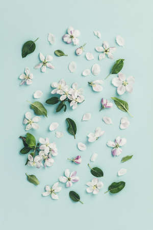 Flat-lay of white apple blossom flowers over light blue background, top view, flat lay Reklamní fotografie