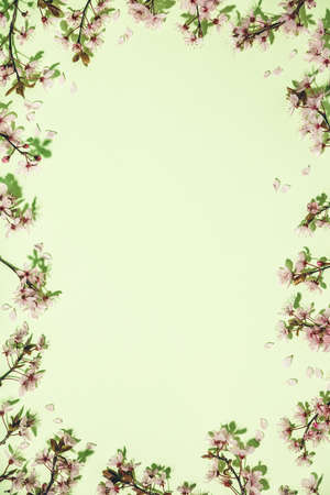 Spring border with cherry blossoms on green pastel background