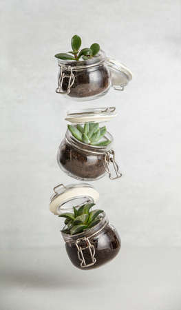 Small succulent plants in glass jar pot flying against white brick wall