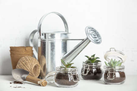 Small succulent plants in glass jar pots and garden tools against white brick wall