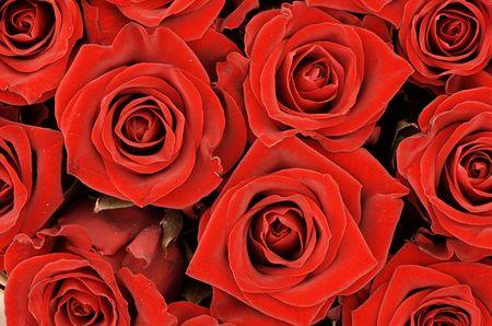rosettes: Bouquet de rosas rojas y otro close-up