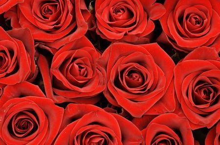 rosettes: Bouquet de rosas rojas  Foto de archivo