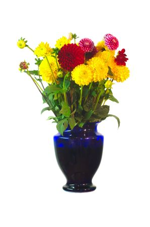 Dahlias in blue vase Stock Photo