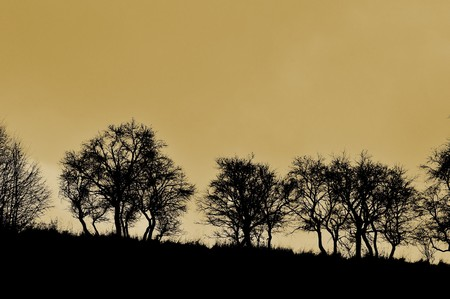 trees in evening in sepia toning Stock Photo