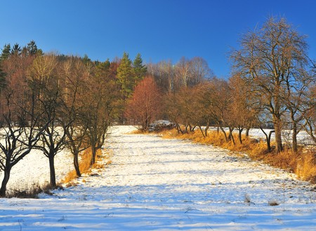 forest trees with pieces of snow Stock Photo
