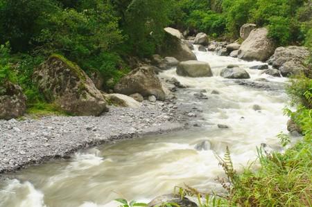 River in Rainforest in Argentina