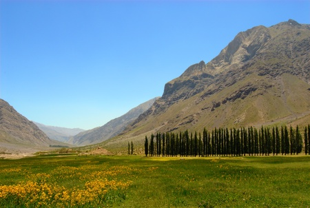 Meadow in Andes in Chile