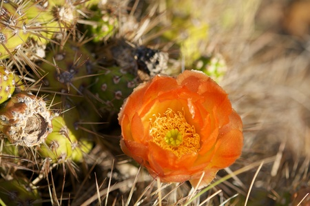Cactus in wildness in America Stock Photo