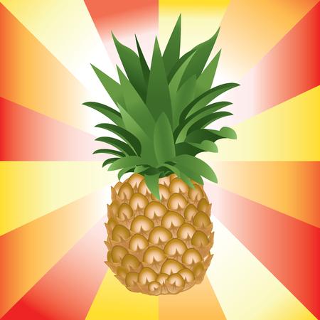 Detail vector illustration of ripe pineapple on colorful background. Ilustração