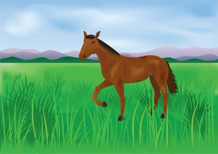 The wild horse grazes on the meadow Illustration