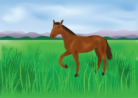 The wild horse grazes on the meadow Illusztráció