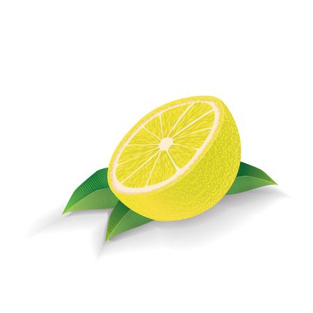 Lemon with leaves isolated on white background. Vector. Ilustração
