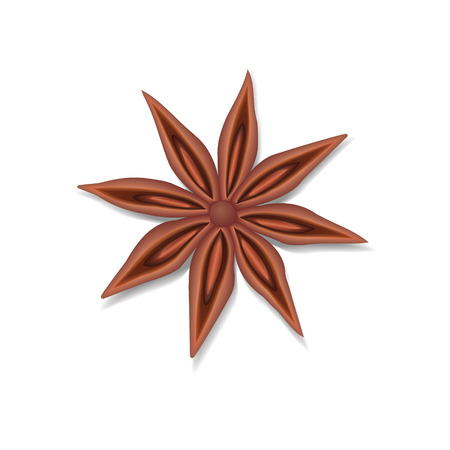 Anise star seed isolated over the white background.
