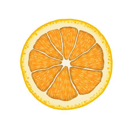 Vector realistic orange slice. Illustration of citrus. Ilustração