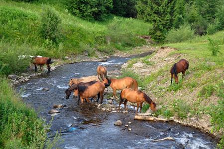 caballo bebe: caballo lleg� al r�o a beber agua