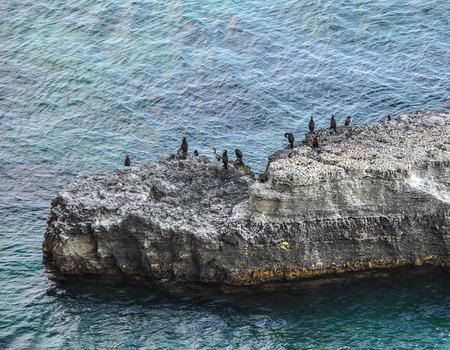 phalacrocoracidae: Colony of cormorants on the rocks in the sea, Ukraine