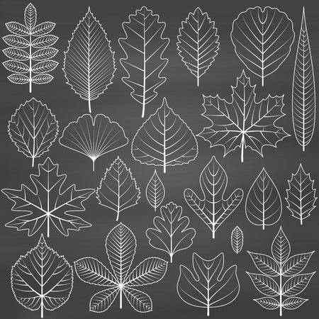 alder: Set of tree leaves on chalkboard background. Twenty different icons. Various elements for design. Cartoon vector illustration. Black and white colors