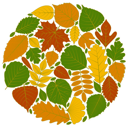 alder: Circle pattern made of tree leaves. Twenty different icons. Various elements for design. Cartoon vector illustration. Autumn colors, green, orange, yellow, red.