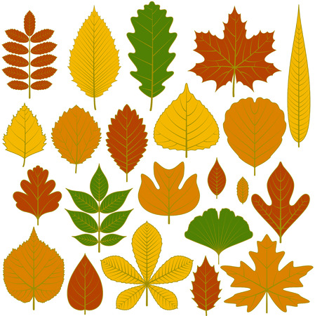 willow tree: Set of tree leaves. Twenty different icons. Various elements for design. Cartoon vector illustration. Autumn colors, green, orange, yellow, red.