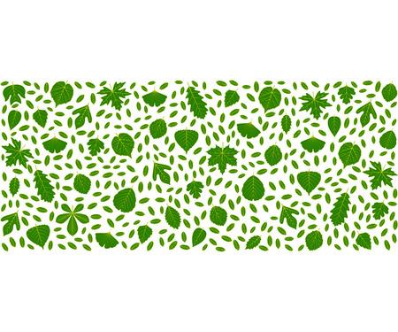alder: Spring background made of different tree leaves. Various elements for design. Cartoon vector illustration. Green fresh colors.
