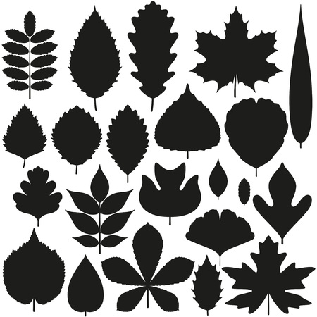 cutout: Set of tree leaves. Silhouette icons. Vector illustration.