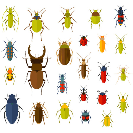 long horn beetle: Flat insect set isolated on the white. Vector illustration. Illustration