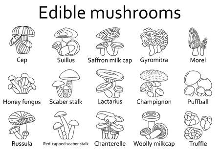 milkcap: Edible mushrooms icons set. Vector illustration. Illustration