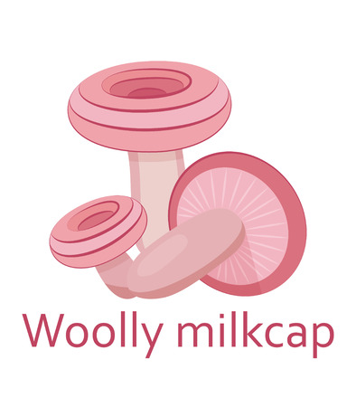 torminosus: Edible mushrooms flat icon. Woolly milkcap. Vector illustration.