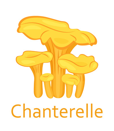 Edible mushrooms flat icon. Chanterelle. Vector illustration.