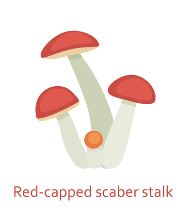 Edible mushrooms flat icon. Red capped scaber stalk. Vector illustration. Illustration