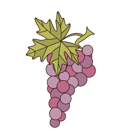 bunch: Bunch of grapes. Vector illustration. Illustration
