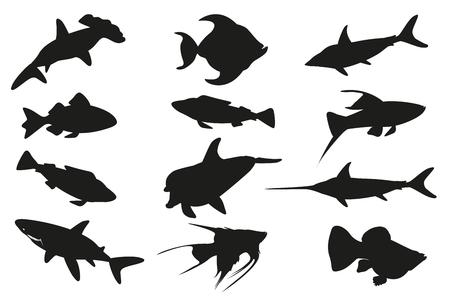 sea saw: Fish set isolated on white background. illustration
