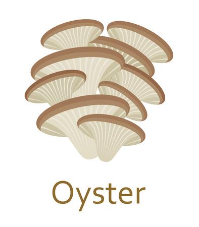 edible mushroom: Edible mushroom flat icon. Oyster. Vector illustration.