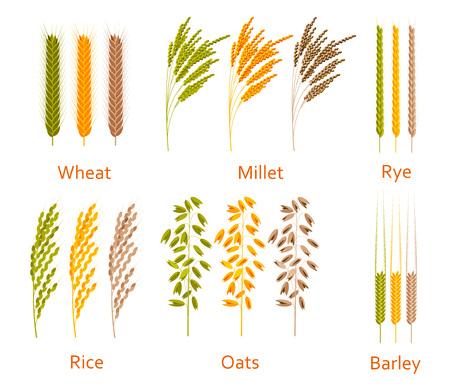 Granen planten vastgesteld. Koolhydraten bronnen. Kleurrijke vector illustratie.
